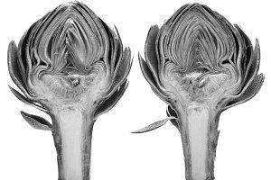 Black and White Artichoke Study