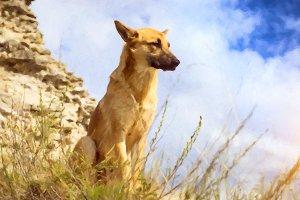 German shepherd guarding the ruins