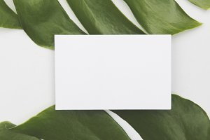 Blank business card on tropical leaf