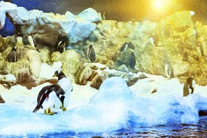 Penguins on the artificial glacier