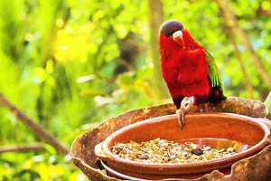 Bright parrot is feeding from bowl