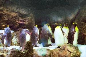 Penguins on artificial glacier