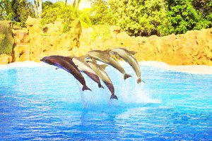 Dolphins Show in pool