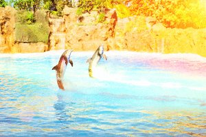 Dolphins Show in pool, Tenerife