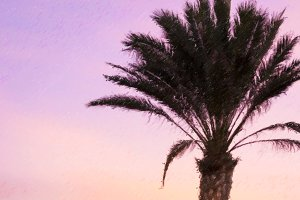 Palm tree, bright sunset