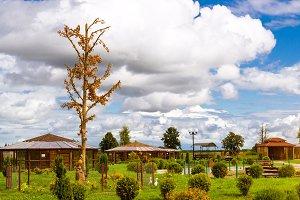 Amber tree, Bird farm