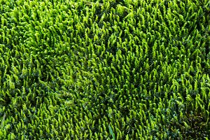Green moss texture or background