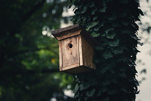 Bird house in the forest