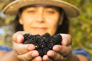 blackberry in woman hands