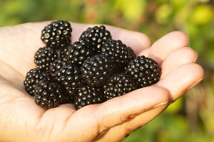 blackberry in woman hand