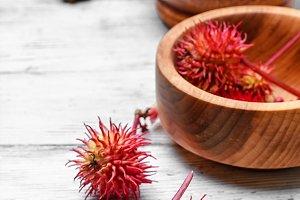 Ornamental medicinal plant