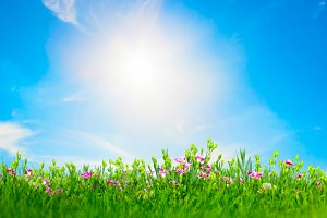 Summer meadow in sunny day.