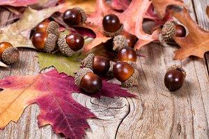 Seasonal Autumn Acorns on Leaves