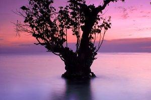 Single Tree On The Beach 03