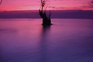 Single Tree On The Beach 04