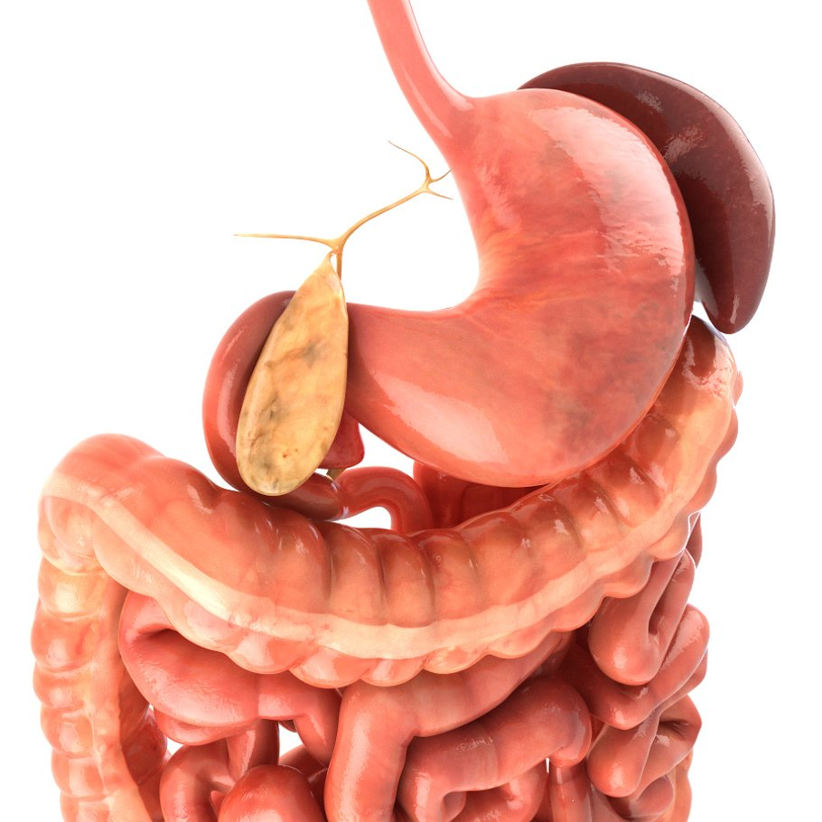 Digestive system. Animated in People - product preview 2