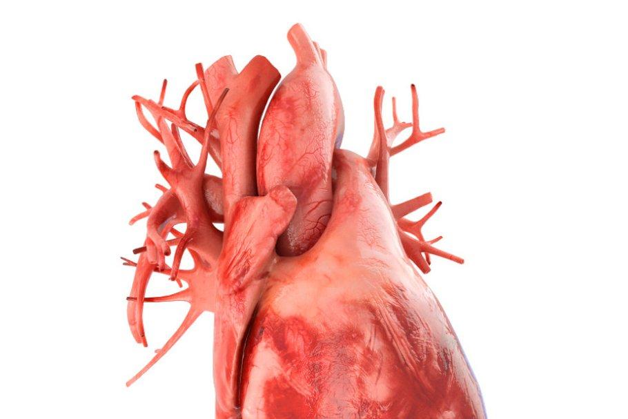 Human heart animated v3