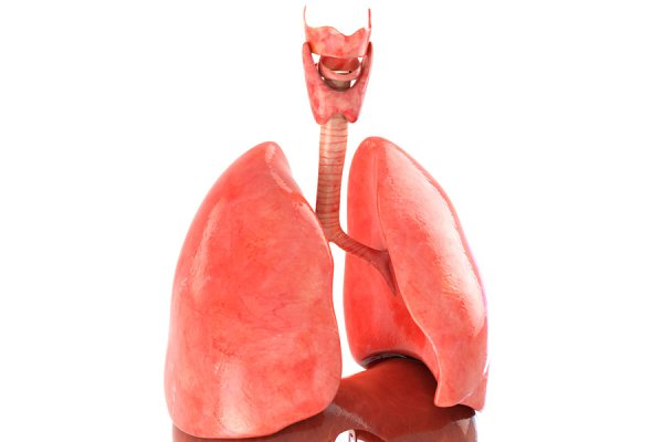 3D People Models - Lungs animated