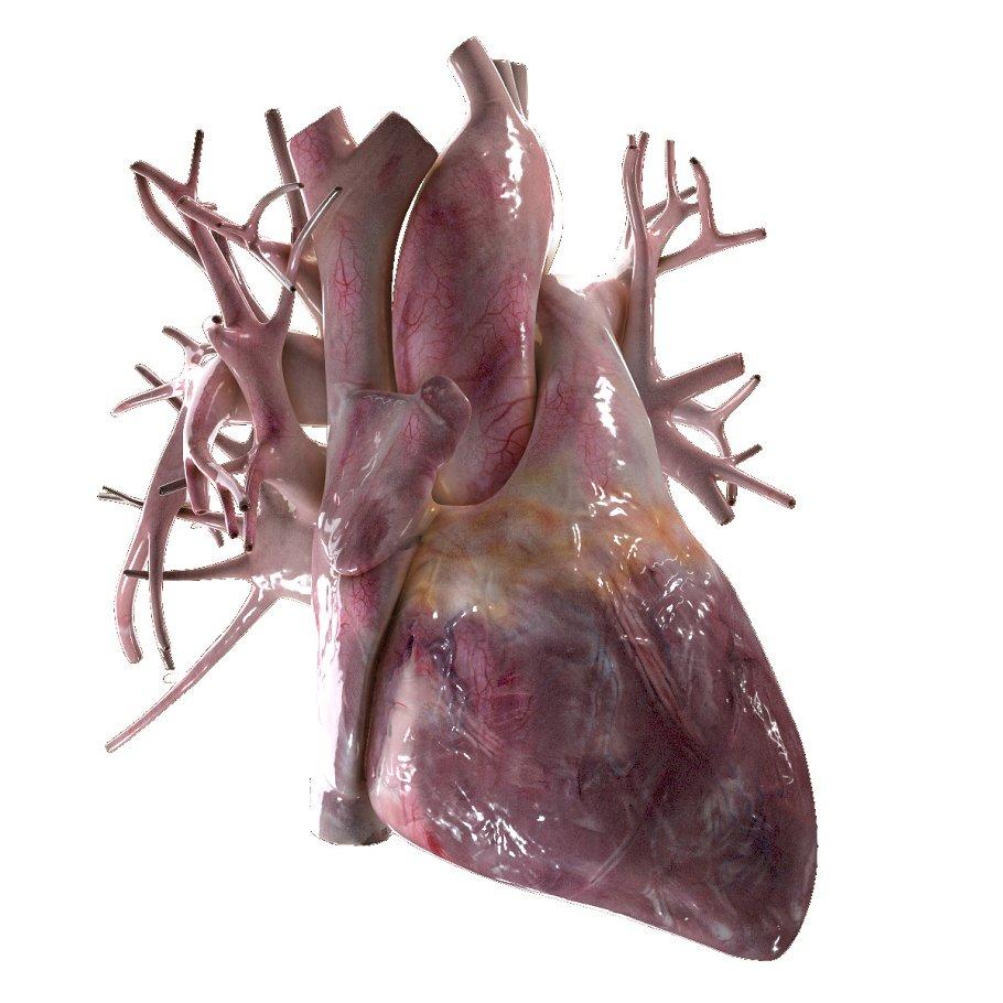 Human Heart Beating High Quality