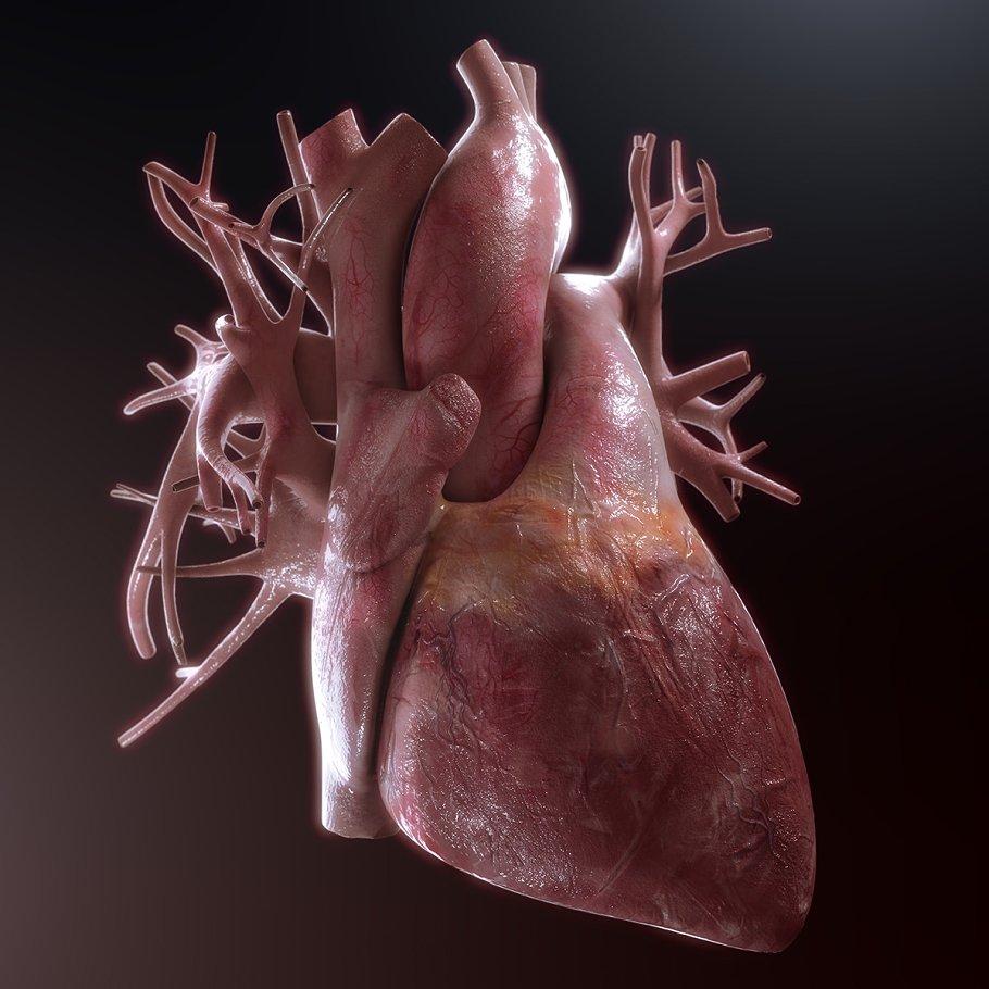 Human Heart High Quality