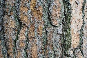 Tree bark texture image