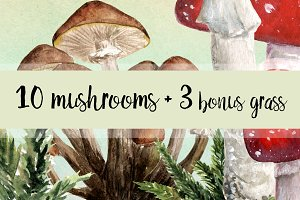 10 Watercolor Mushroom Set + 3 Bonus