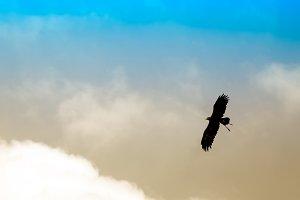 Eagle under clouds