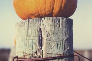 Pumpkin on a Post
