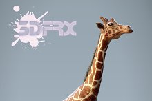HD_GIRAFFE by  in Animals