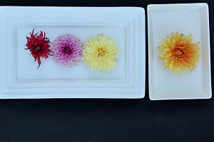 flowers on tray