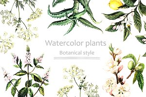 Watercolor plants in botanical style