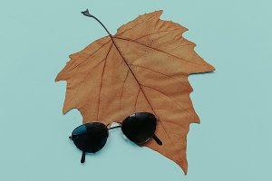 Retro Sunglasses. Fall Style