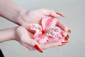 Pink flower of an orchid in hands