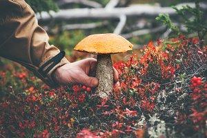 Man hand picking Mushroom