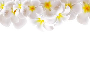 Abstract White Flower Background