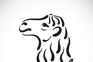 Vector of camel head