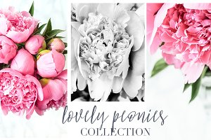 Lovely Peonies Styled Photos
