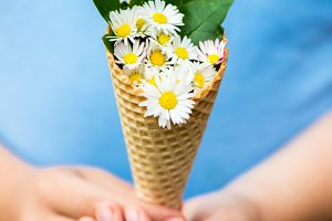 Summer Daisies in a Cone