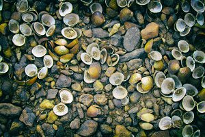 Shells and stones on the floor.