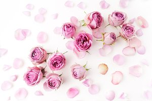 Pink roses and petals scattered on white background. Flat lay, overhead view