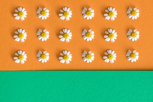 background with daisy flowers onorage and green background.