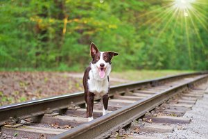 Dog on the rails. selective focus