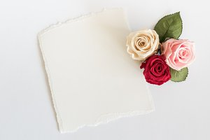 Roses and card on white background.
