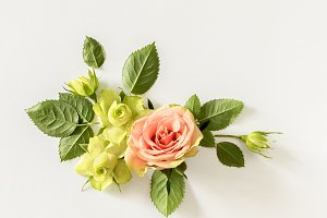 Roses and leaves on white background. overhead view