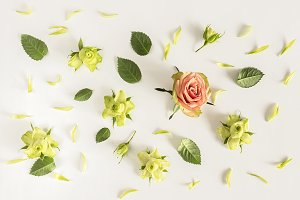 Roses and leaves on white background.