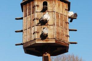 bird nesting pigeon home box