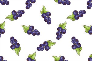 Currants pattern on white background