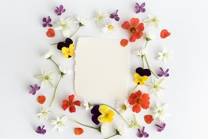 Frame of colourful flowers background. Flat lay, top view