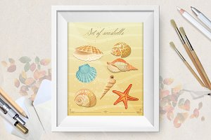 Collection of sea shells posters.