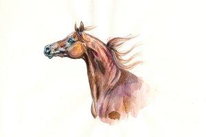 Arabian horse watercolor